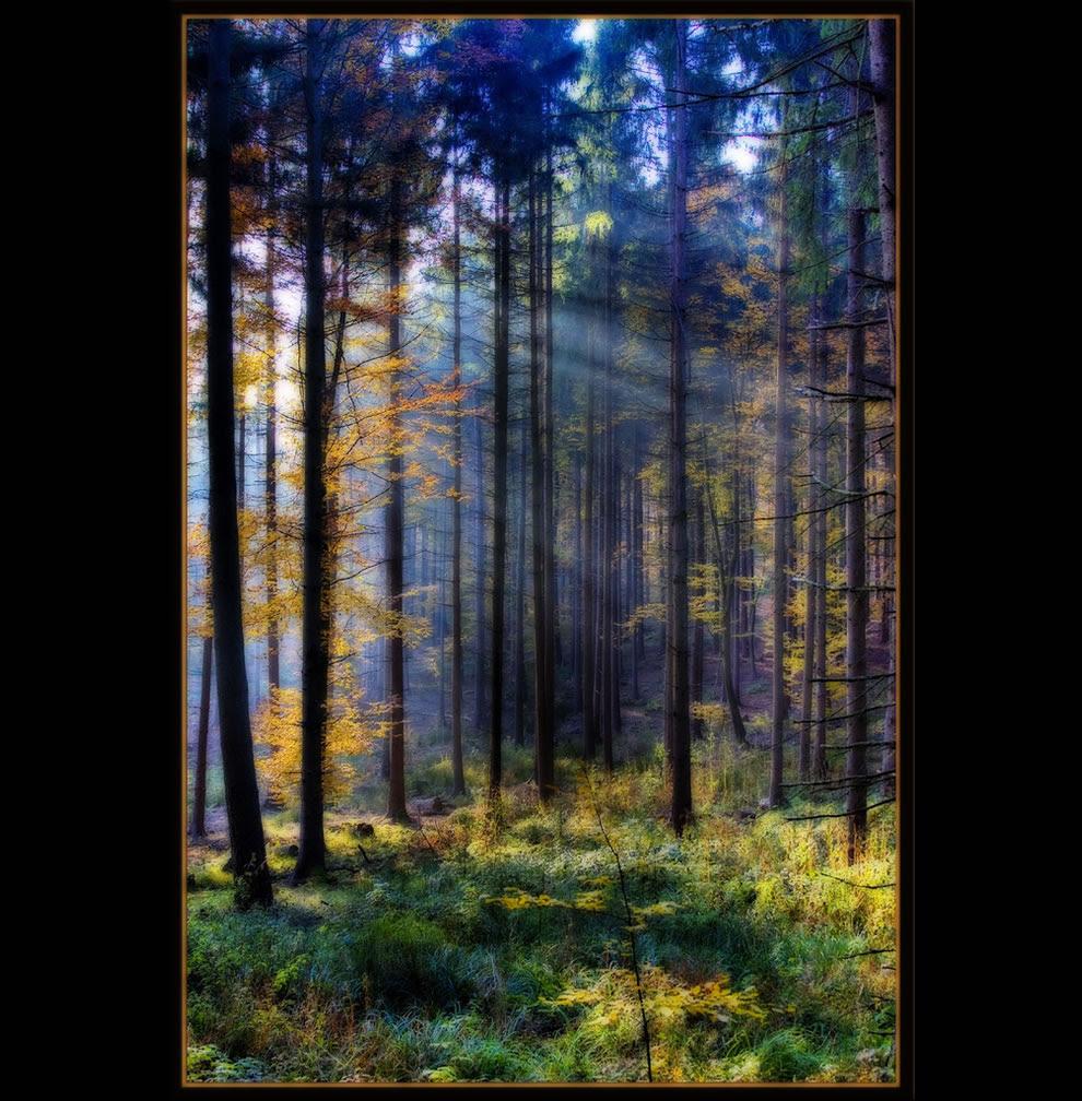 Fairy Forest on Nov 1 in Schwarzwald