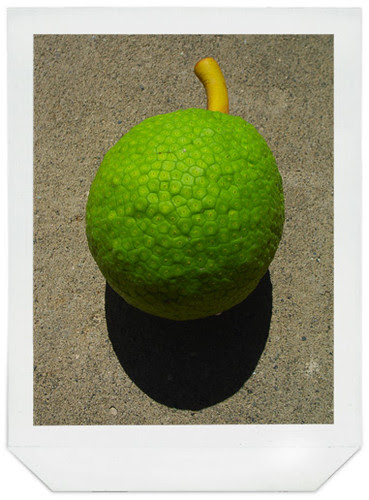 bread-fruit