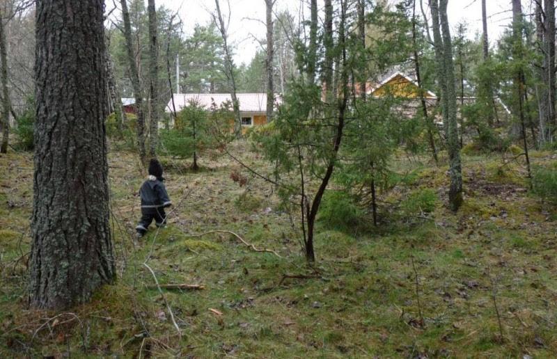Tove på skogspromenad