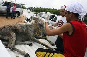 Jornada especial de rescate animal La Guajira 2010