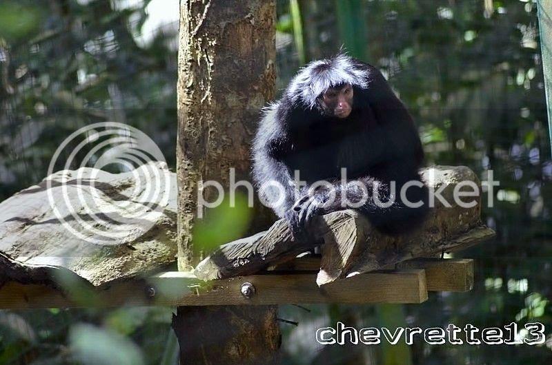 http://i1252.photobucket.com/albums/hh578/chevrette13/Guadeloupe/_DSC0088Copier_zps4acbb94f.jpg