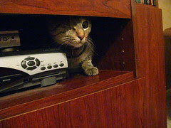 Maggie squeezes into the entertainment center
