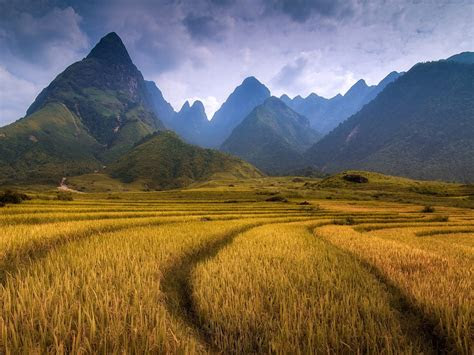 field rice mountains  jagged rocky peaks widescreen