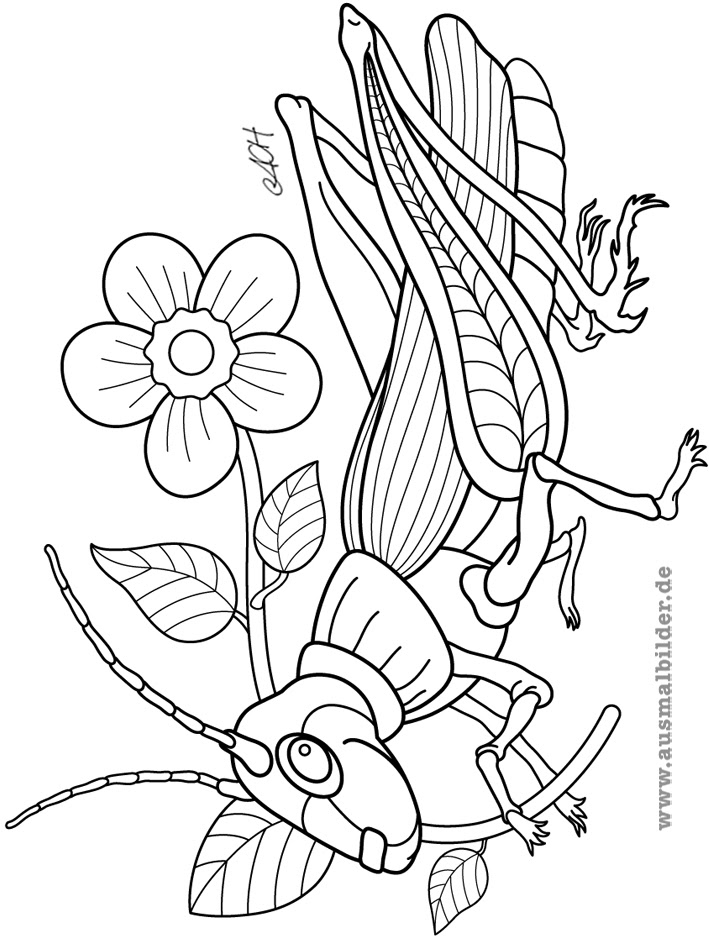 insekten malvorlagen pdf
