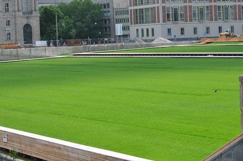 Rasen vom Palast der Republik