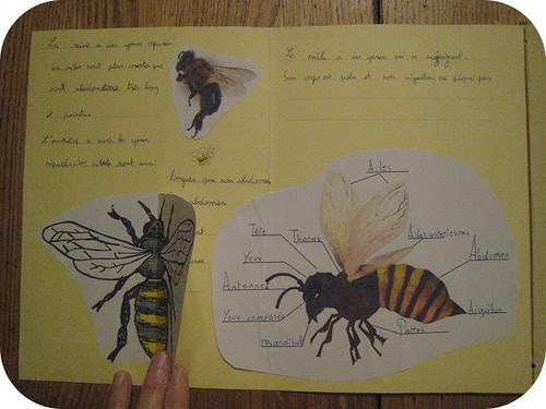 lapbook abeille 9
