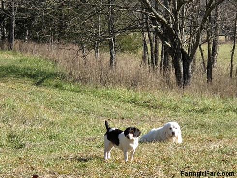 Slowly defrosting in the hayfield (6) - FarmgirlFare.com