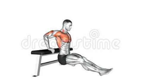 seated dips muscles worked awesome home
