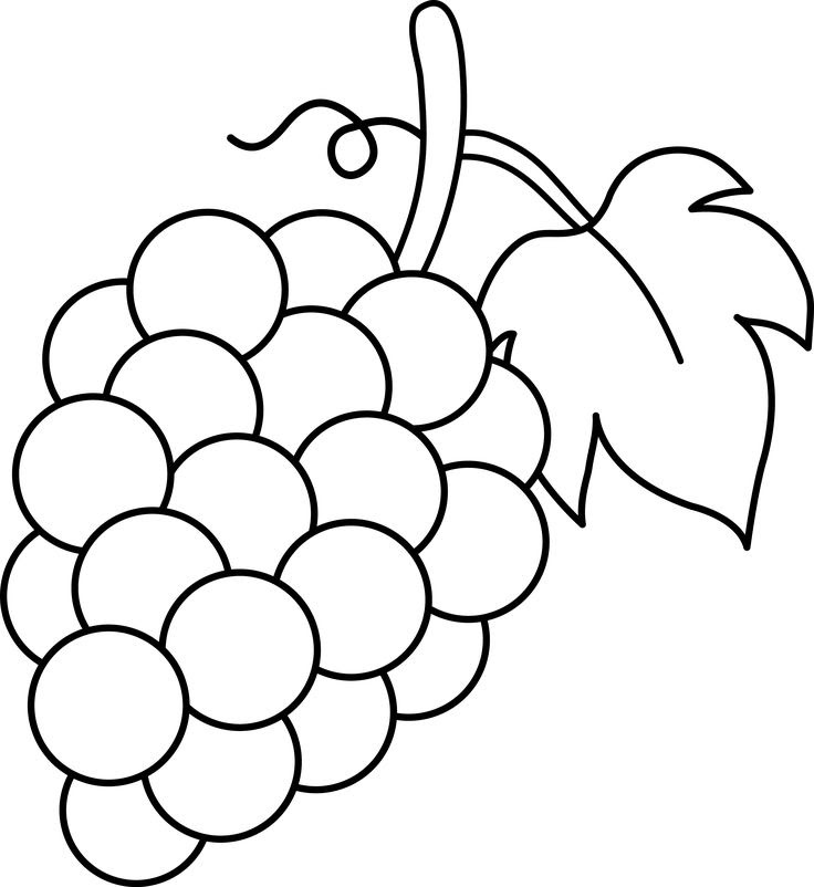 grape drawing 1