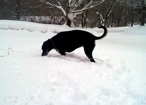 Lola_snow_12711