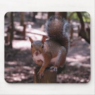 Squirrel Mousepad mousepad