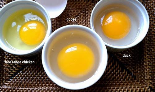 Incredible Edible Eggs
