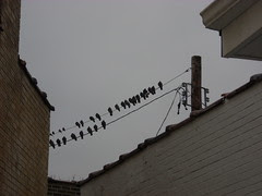 Birds waiting for leftovers at World's Fair Donuts