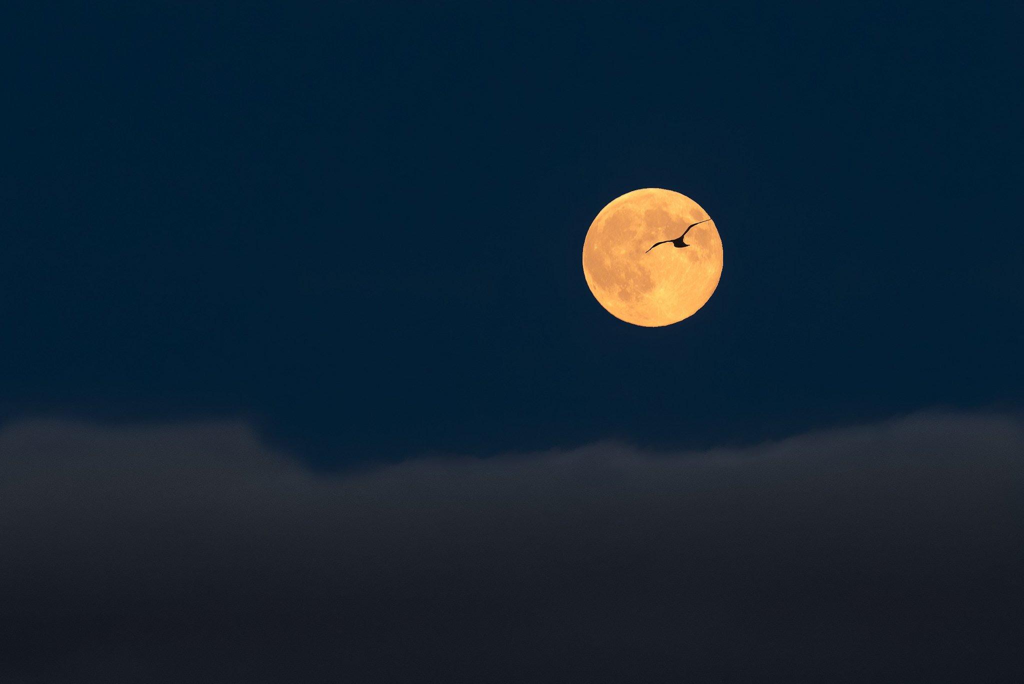 Full moon sky clouds birds flight silhouette landscape