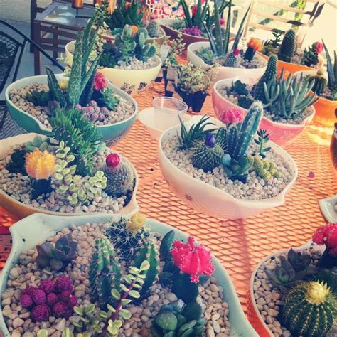 Best 25  Cactus centerpiece ideas on Pinterest