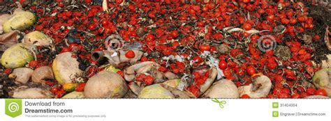 Tomatoes Waste Food Stock Images   Image: 31404004