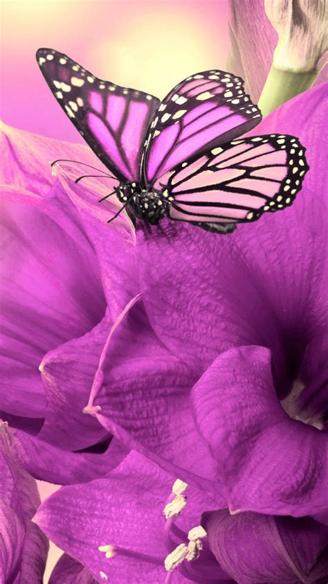 girly butterfly iphone wallpaper hd