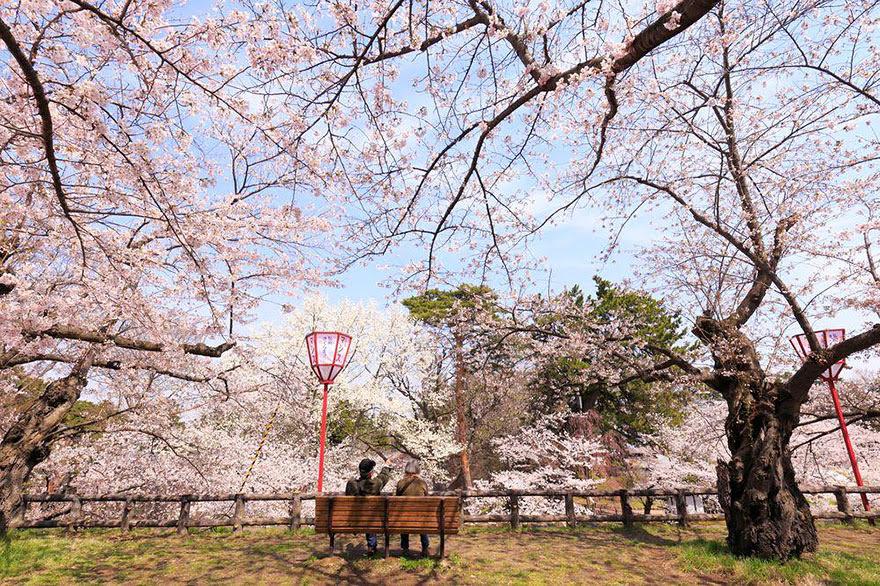 primavera-flores-cerezo-sakura-japon-national-geographic (7)