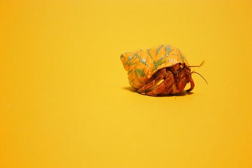 yellowcrab2