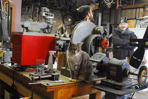 Circle A Shop Cat