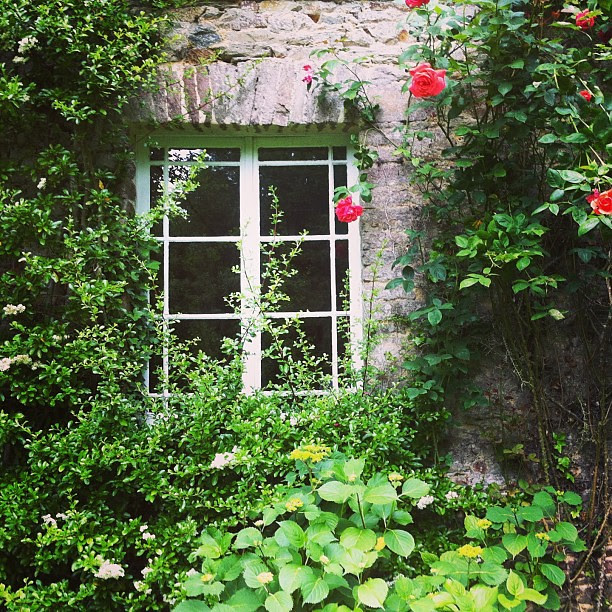 Old Stones and summer roses. #france