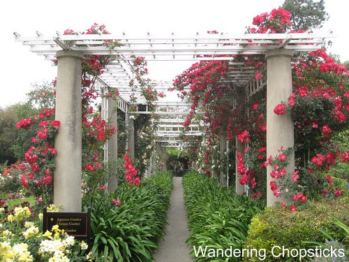 The Huntington Library, Art Collections, and Botanical Gardens (Rose Garden) (Spring) - San Marino 11