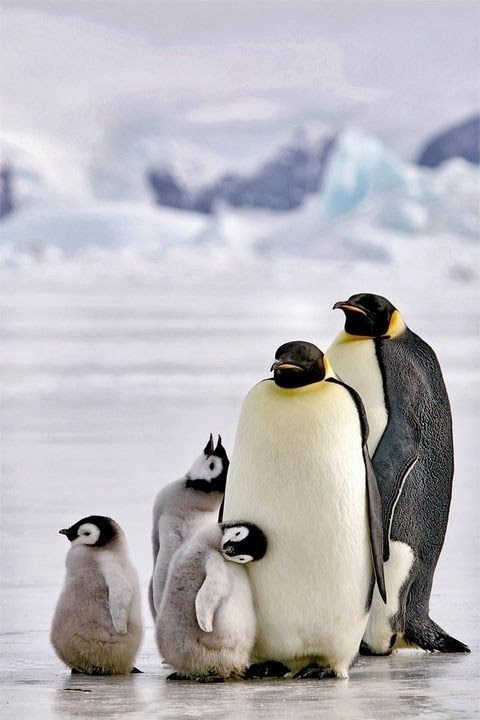 Empire Penquin Family