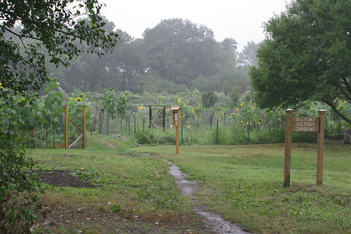 wet gardens 1
