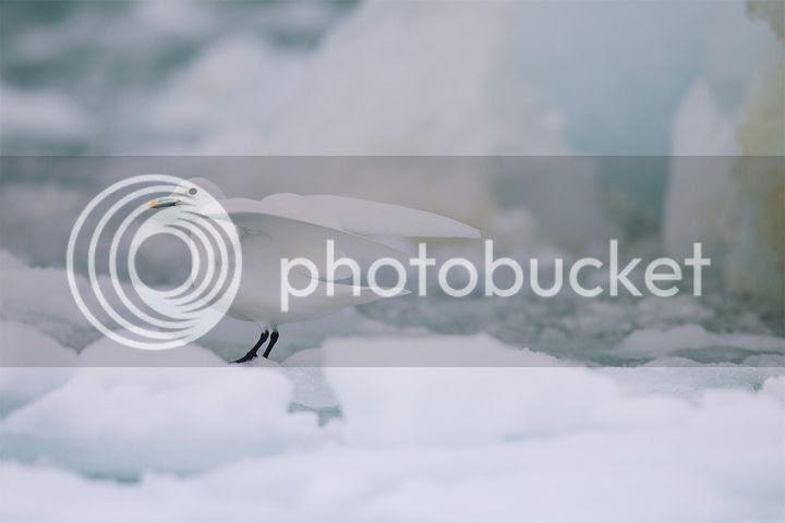 photo Ivan-Starastin-2_zps73267e15.jpg
