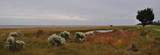 Metompkin Bay (14)