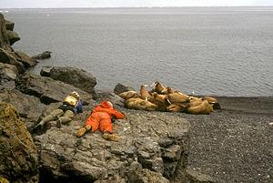 English: Hall Island, Bering Sea 1984. Alaska ...
