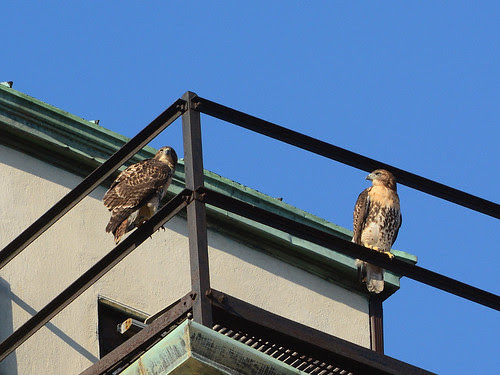 Cathedral Fledges B & A