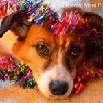 Bella - I Still Want More Puppies