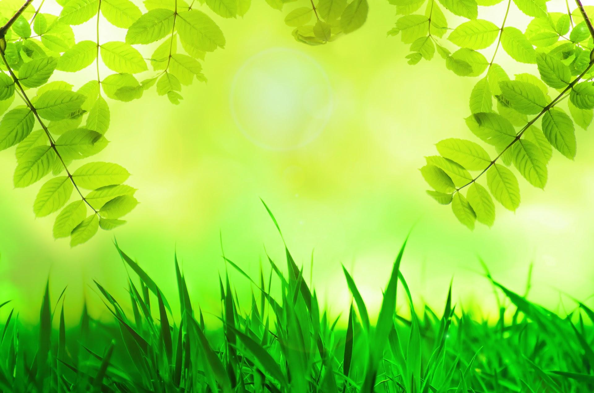 Download 54 Background Tumbuhan Gratis Terbaru