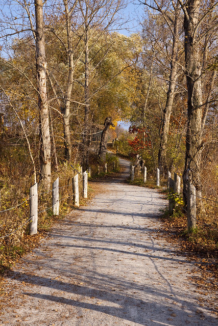 autumn path ajax