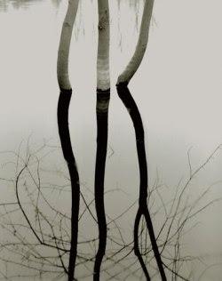 s-c-r-a-p-b-o-o-k:  Koichiro Kurita/Concord River 1992. From the series Hydrosphere.