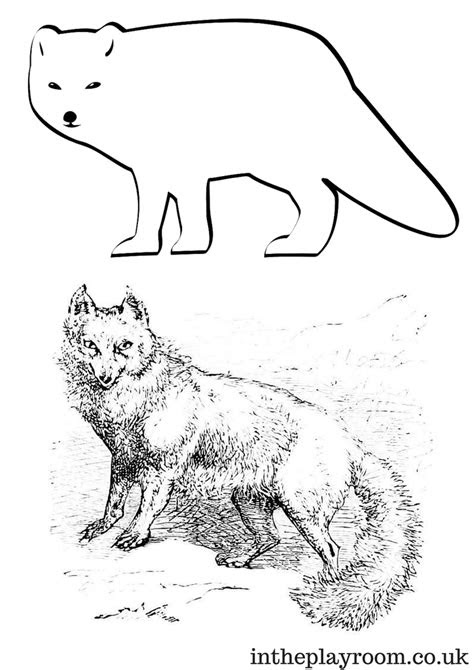 arctic animals colouring pages   playroom