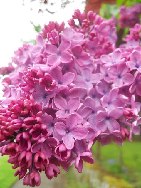 spring2011 290
