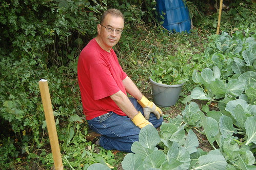 David weeding cabbage patch Jul 10