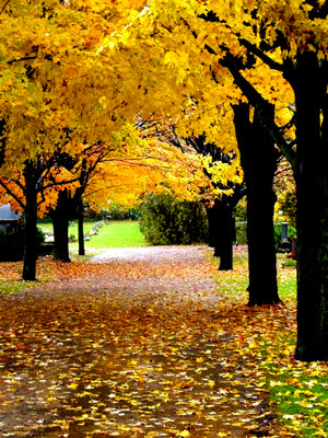 Kết quả hình ảnh cho hình ảnh mùa thu vàng
