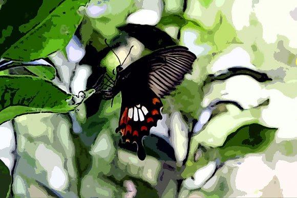 Kostenlos Spielen Schmetterling