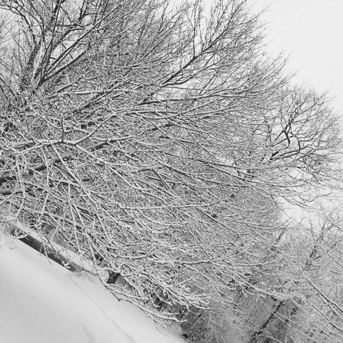 Good Snowy Morning! #snow #winter #newengland