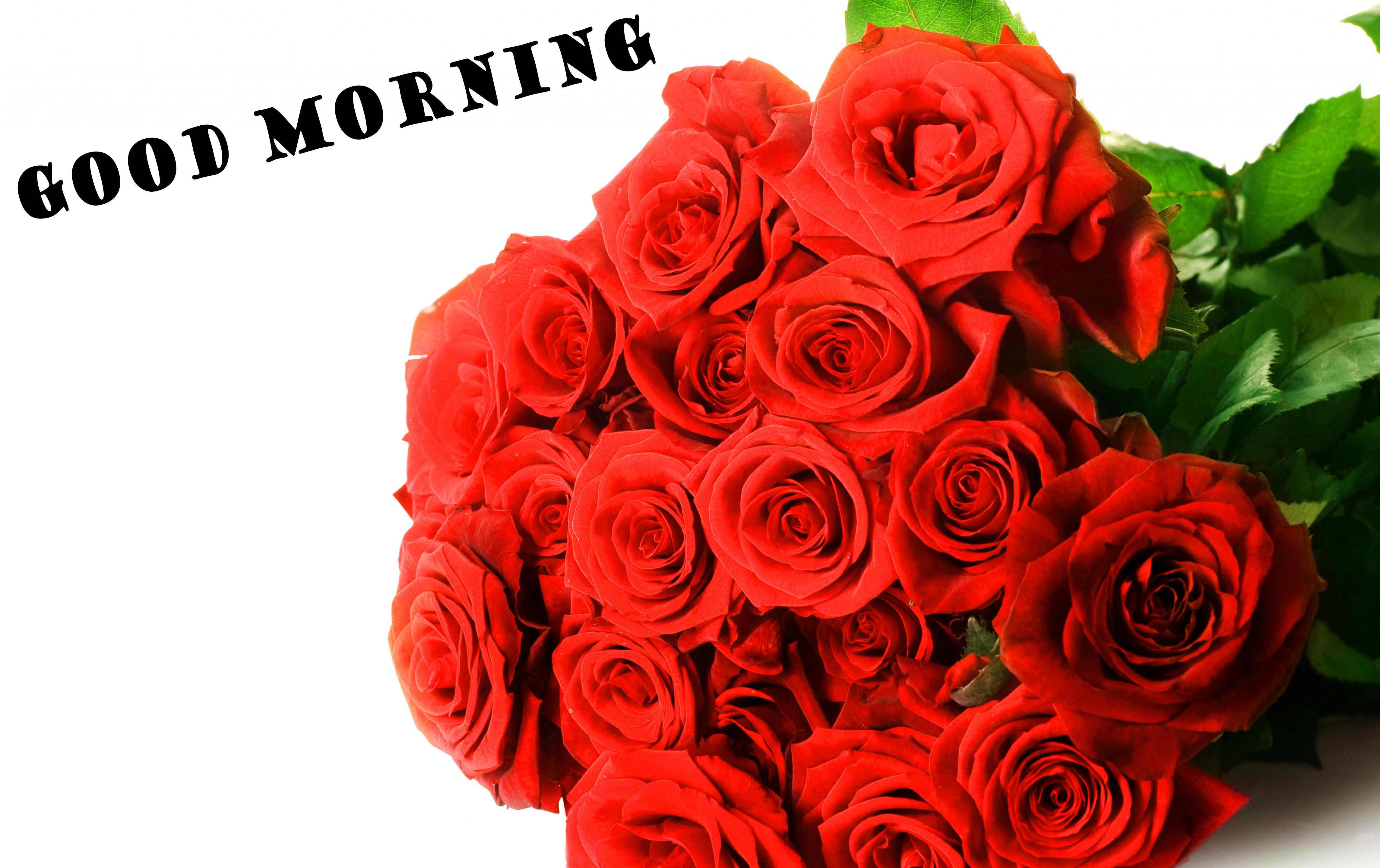 472 Good Morning Red Rose Images Wallpaper Pics For Girlfriend Wife