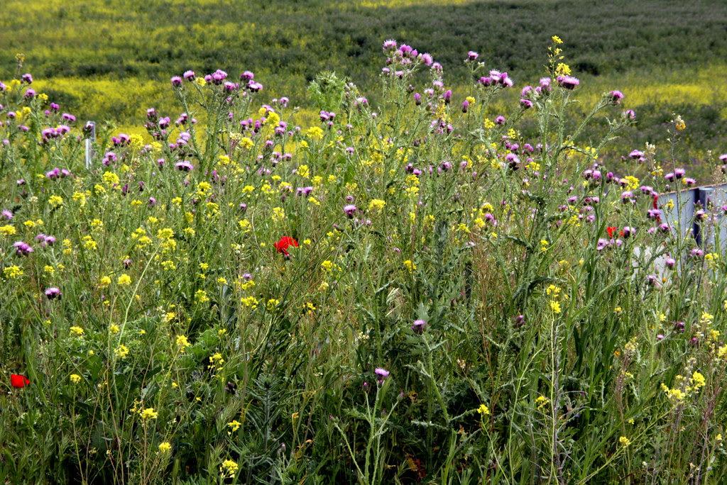 flora de Valdemoro en la Cañada Real Galiana