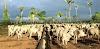 DENUNCIA GRAVE: Tem secretário do Marcos Rocha comprando gado com dinheiro vivo