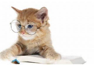 rahmian gambar gif  jenis hewan kucing kucing lucu
