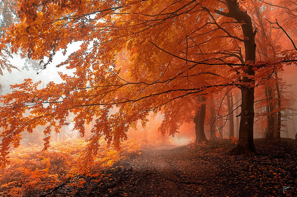 top 10 fairy  tale forests..