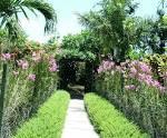 Plants for tropical gardens - home decor
