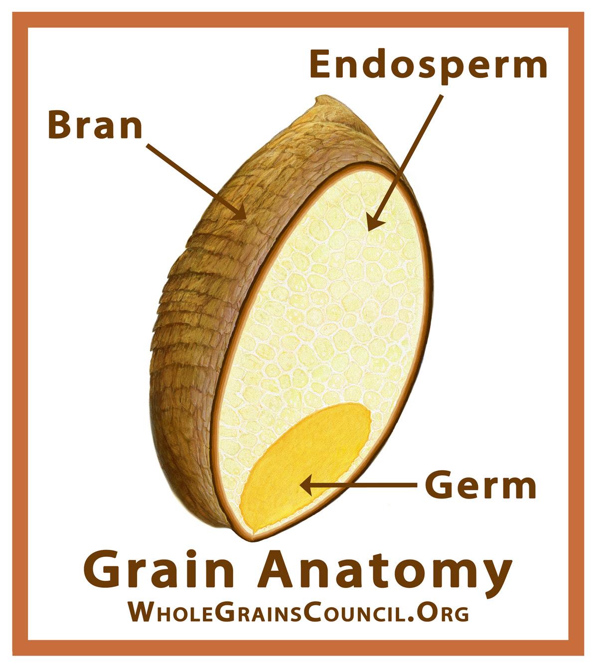 GrainParts_WGC_4x4