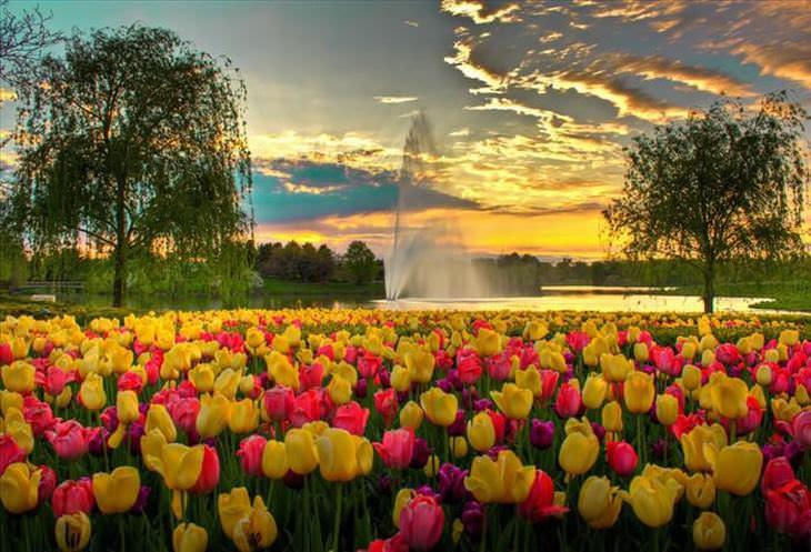 As mais belas fotos de Tulipa